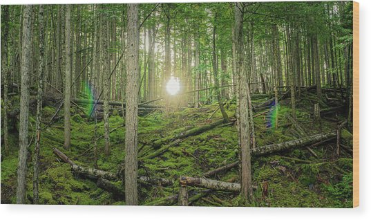 Monashee Forest Sunset With Flare Wood Print