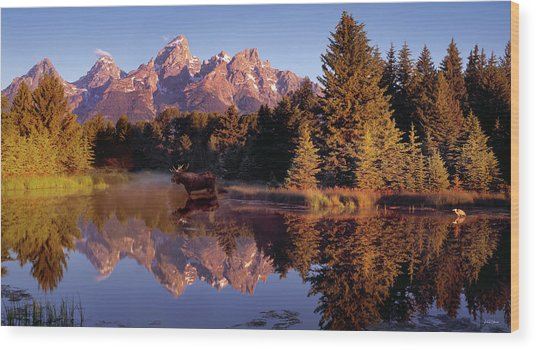 Moose Tetons Wood Print