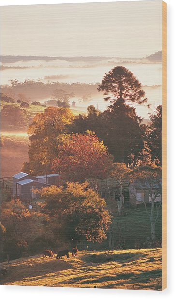 Morning Mist Over South Coast Farmland Wood Print by Auscape / Uig