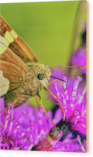 Moth On Purple Flower Wood Print
