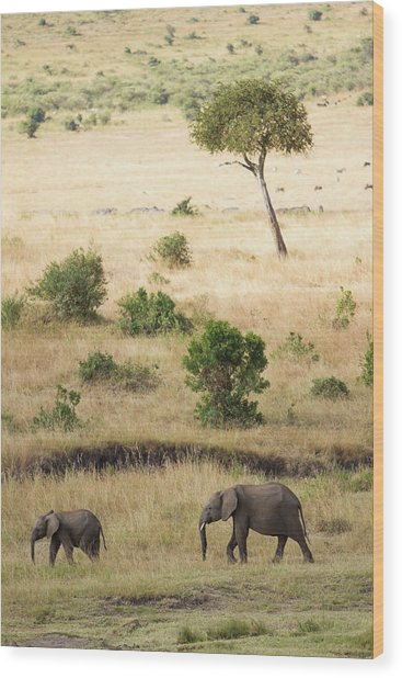 Mother And Baby Elephant In Savanna Wood Print by Universal Stopping Point Photography