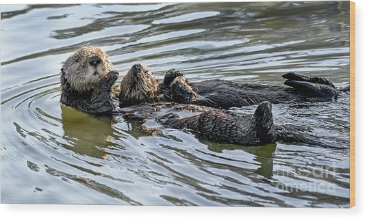 Mother Sea Otter Relaxing With Baby Wood Print