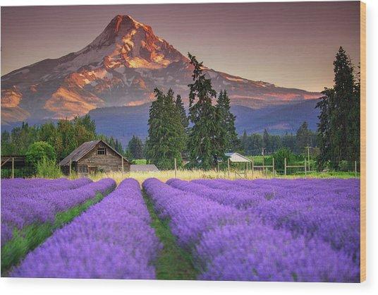 Mount Hood Lavender Field  Wood Print
