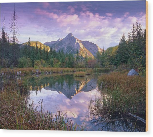 Mount Lorette And Spruce Trees Wood Print by Tim Fitzharris/ Minden Pictures