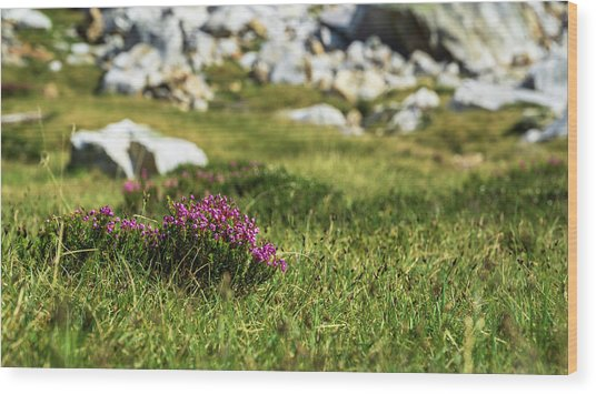 Mountain Heather Wood Print