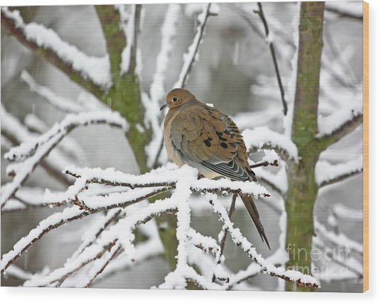 Mourning Dove In Snowstorm Wood Print