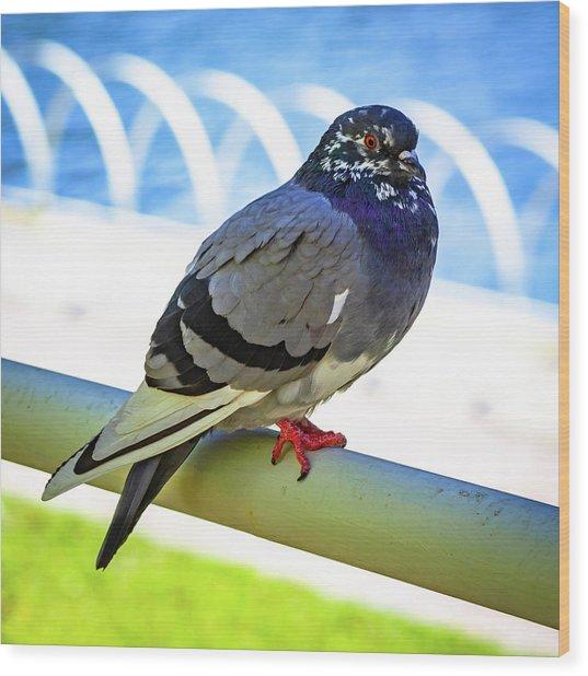 Mr. Pigeon Wood Print