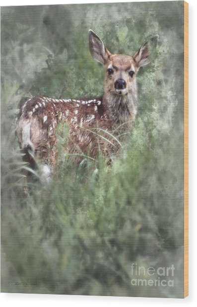 Wood Print featuring the photograph Mule Deer Fawn by Brad Allen Fine Art