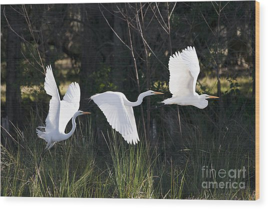 Multiple Exposures Of Large White Bird Wood Print