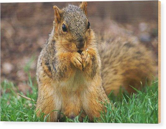 Munching Cute Fox Squirrel Wood Print