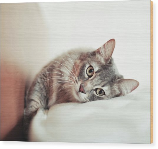 Munchkin Cat Lying On The Bed Wood Print