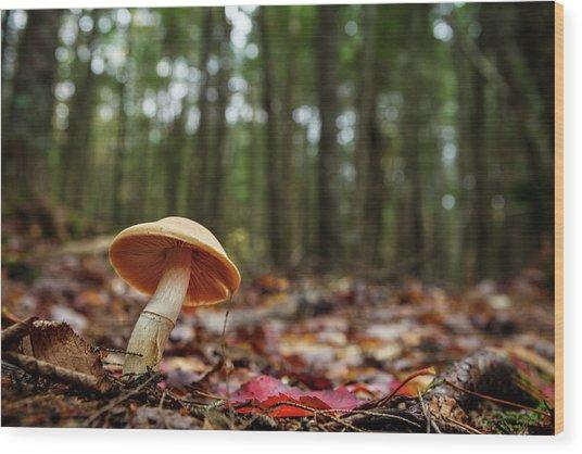 Mushroom Growing In Forest Wood Print by Laszlo Podor