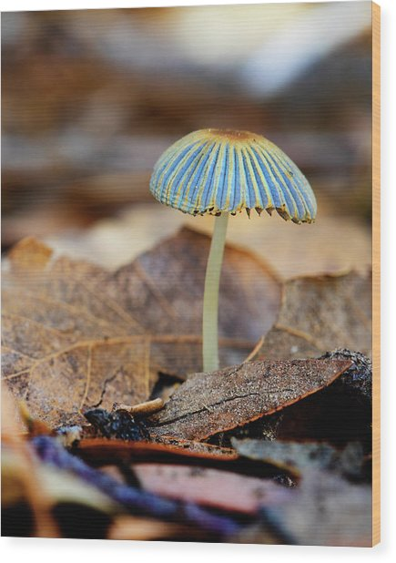 Mushroom Under The Oak Tree Wood Print