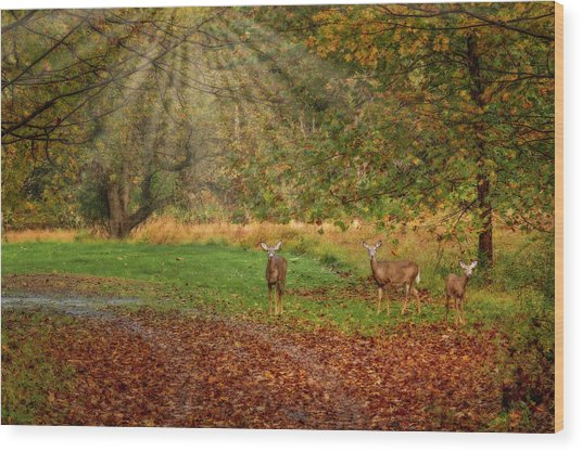 Wood Print featuring the photograph My Deer Family by Susan Candelario