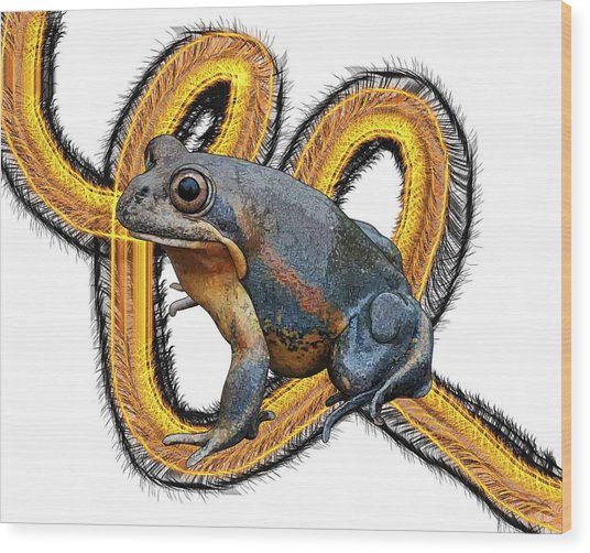 N Is For Northern Banjo Frog Wood Print