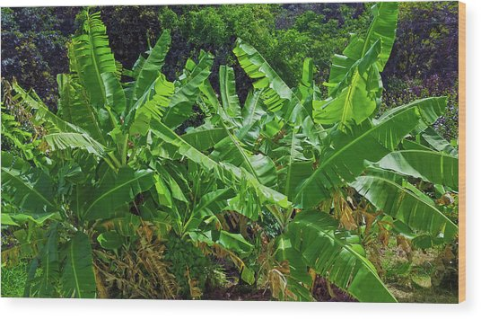Nana Banana Wood Print