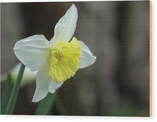 Narcissus - 19 4918 Wood Print