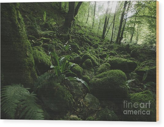 Natural Green Forest With Moss And Lush Wood Print