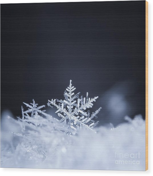 Natural Snowflakes On Snow, Photo Real Wood Print