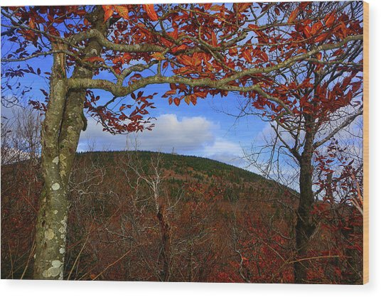 Wood Print featuring the photograph Nature Frames Mount Greylock's Tower by Raymond Salani III