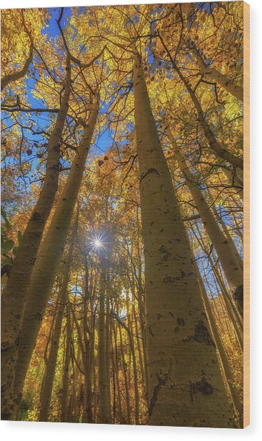Natures Gold Wood Print