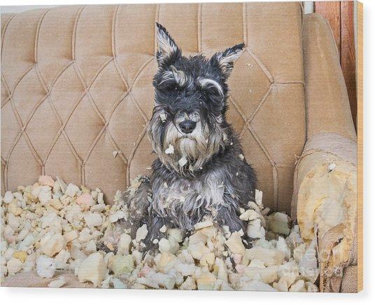 Naughty Bad Schnauzer Puppy Dog Sitting Wood Print