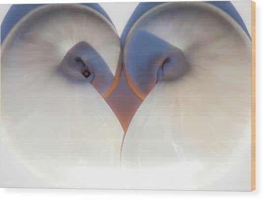 Nautilus 0432 Wood Print