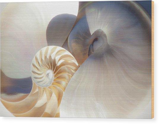 Nautilus 0442 Wood Print