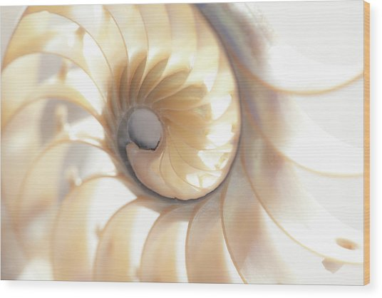 Nautilus 0472 Wood Print