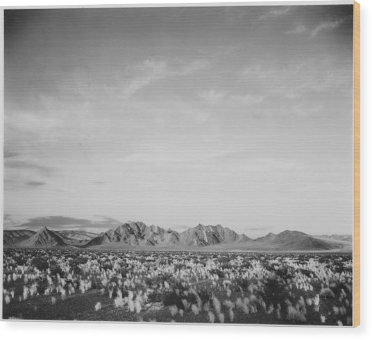 Near Death Valley National Monument Wood Print