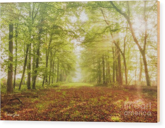 Neither Summer Nor Winter But Autumn Light Wood Print