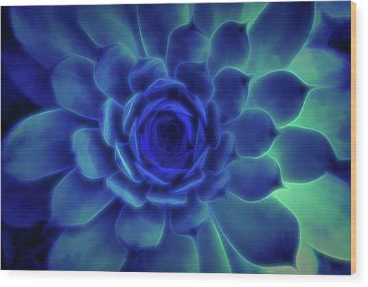 Neon Blue Sempervivum Wood Print