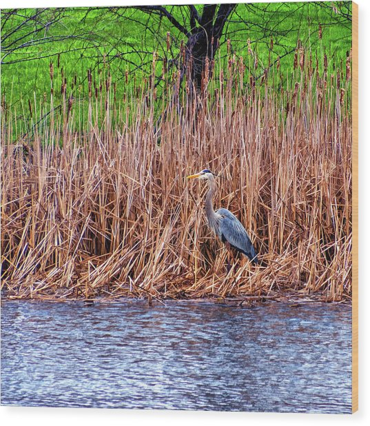 Nesting Great Blue Heron - Paint Wood Print