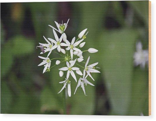 Neston. Wild Garlic. Wood Print