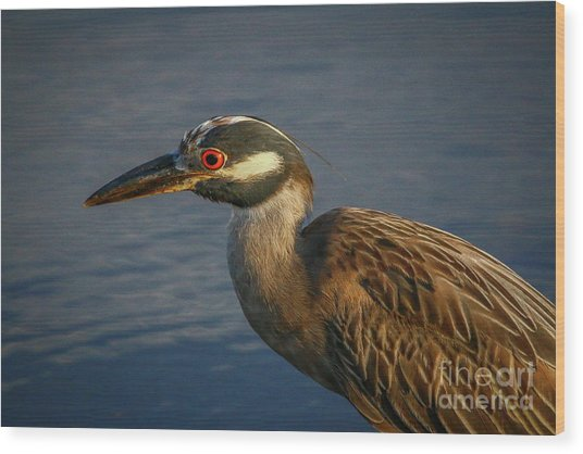 Night Heron Portrait Wood Print