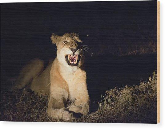 Nightmare Lioness Wood Print