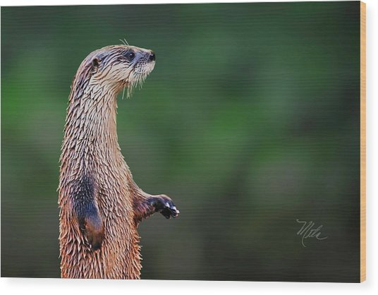 Norman The Otter Wood Print