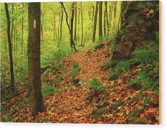 Wood Print featuring the photograph North Side Of Mount Greylock's At 2 by Raymond Salani III