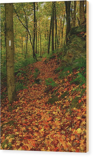 Wood Print featuring the photograph North Side Of Mount Greylock's At by Raymond Salani III