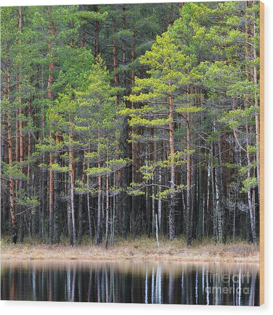 Northern Forest Landscape With A Lake Wood Print