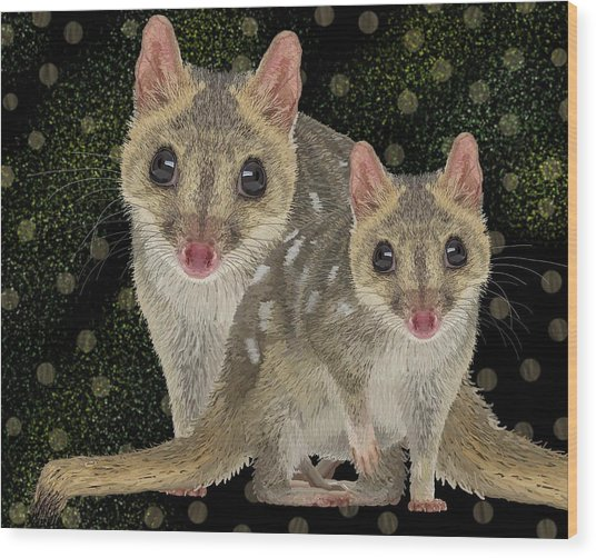 Northern Quoll 3 Wood Print