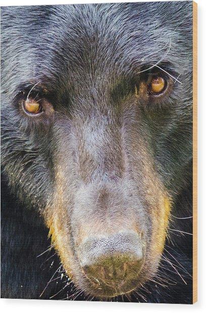 Nosy Bear Wood Print