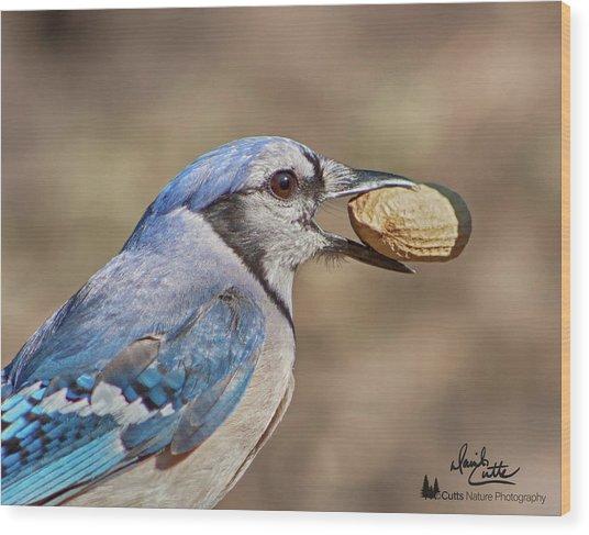 Nutty Bluejay Wood Print