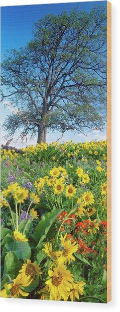 Oak Tree, Arrowleaf Balsam Root Wood Print by Stuart Westmorland