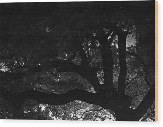 Oak Tree At Night Wood Print by Edward Swearingen