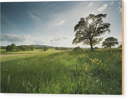 Oak Tree Wood Print by Jeremy Walker