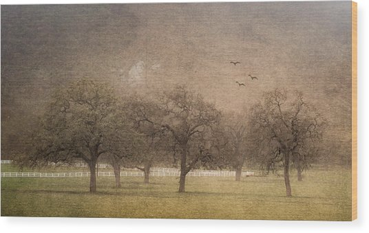Oak Trees In Fog Wood Print