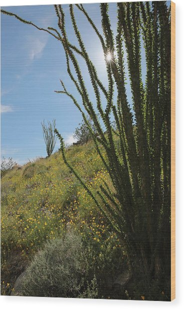 Ocotillo Rays Wood Print by Robin Street-Morris