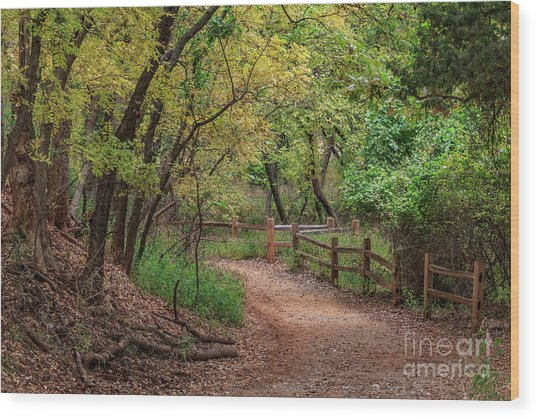 Oklahoma City's Martin Nature Park In Fall Color Wood Print