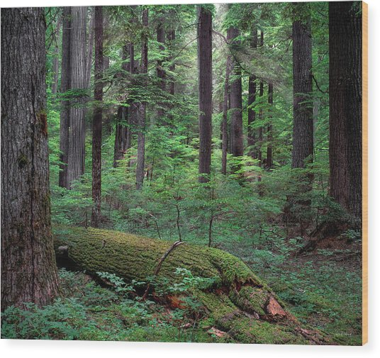 Old Growth Forest Wood Print by Leland D Howard